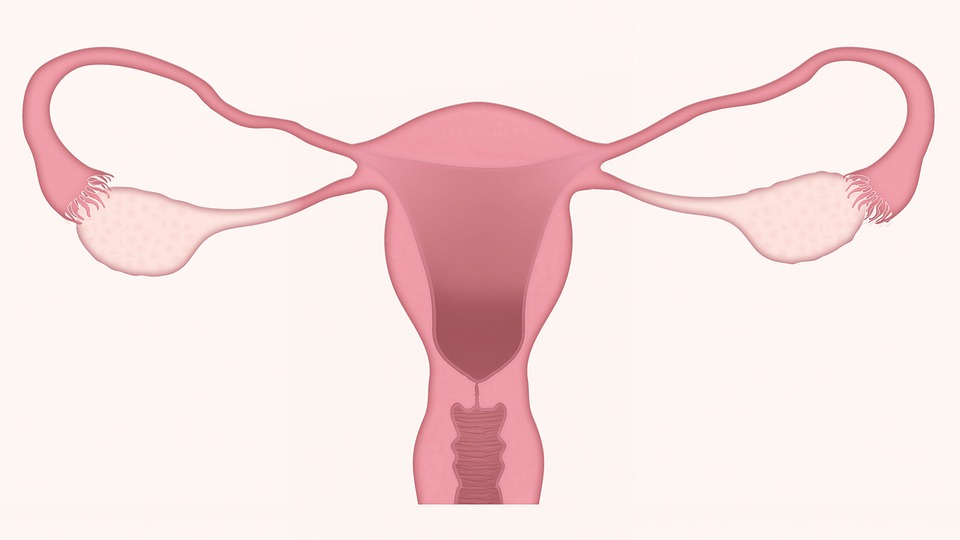 Simple close up representation of a woman uterus in pink